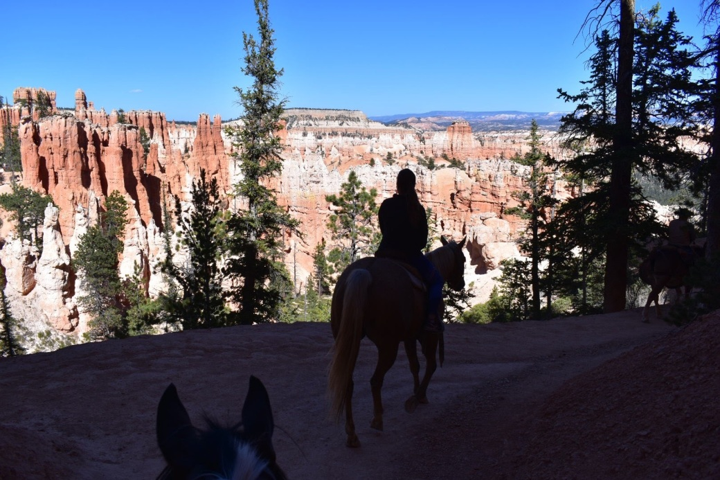 bryce_horse